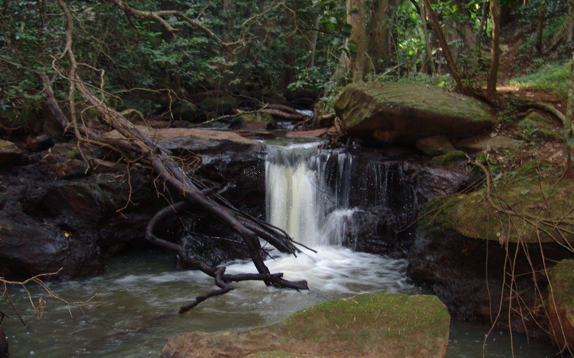 Karura Forest is the latest attraction in Kenya after it was opened to the public in February 2011. It is the largest of 3 gazetted forests in Nairobi.