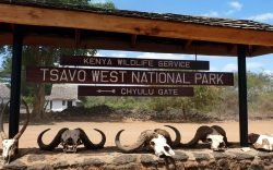 Tsavo West National Park is the ancient land of lions and lava. In its rugged wilderness lies a breathtaking game viewing experience waiting for you.