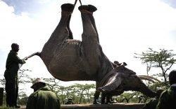 KWS Kicks-off Largest Elephant Translocation