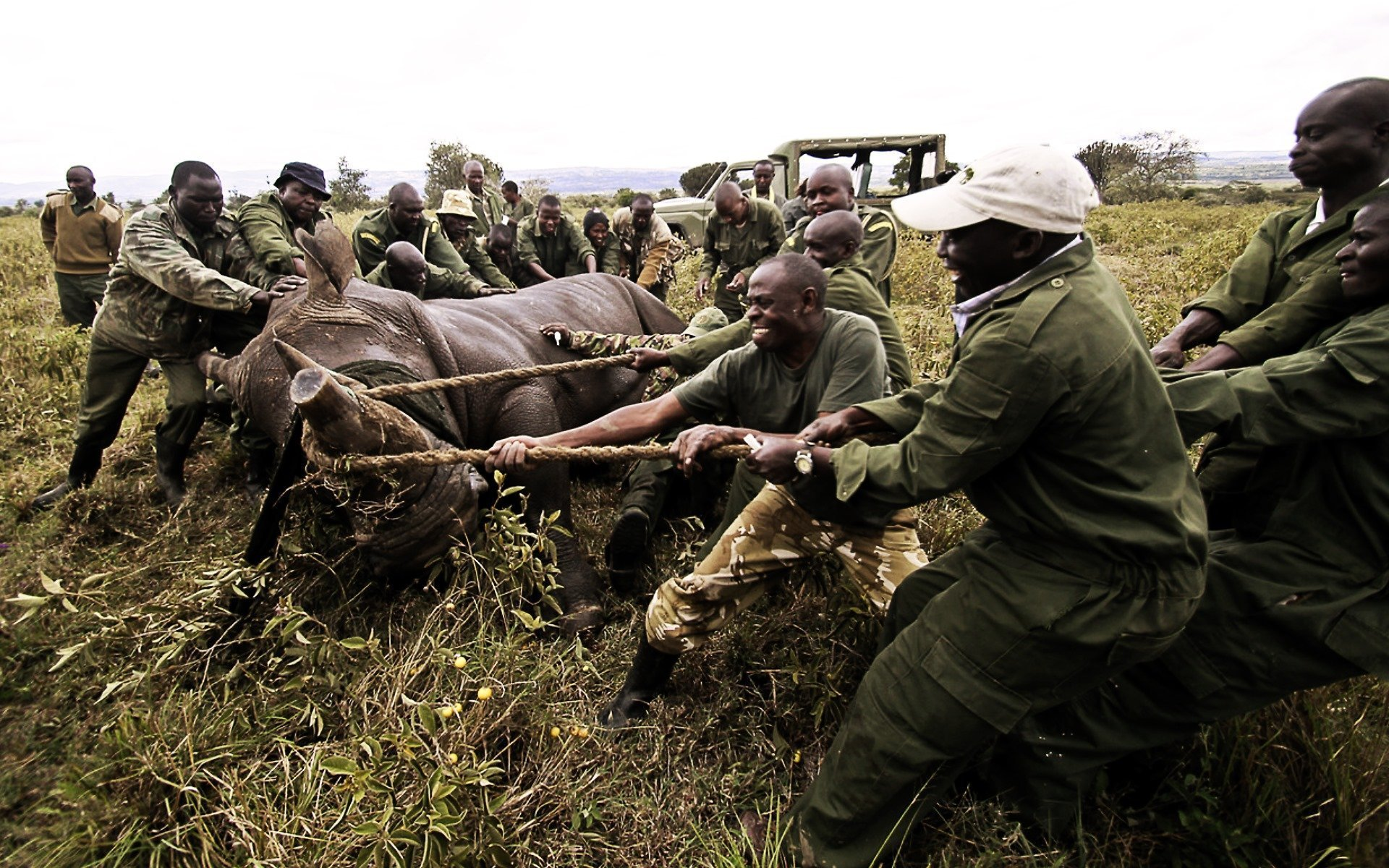 KWS starts its second elephant translocation to move 200 jumbos from Narok to the Maasai Mara National Reserve to lower human-wildlife conflict in the area.