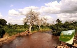 The Safari Card, used in some National Parks in Kenya is a complex affair which we try to simplify in this article so your visits can be enjoyable.