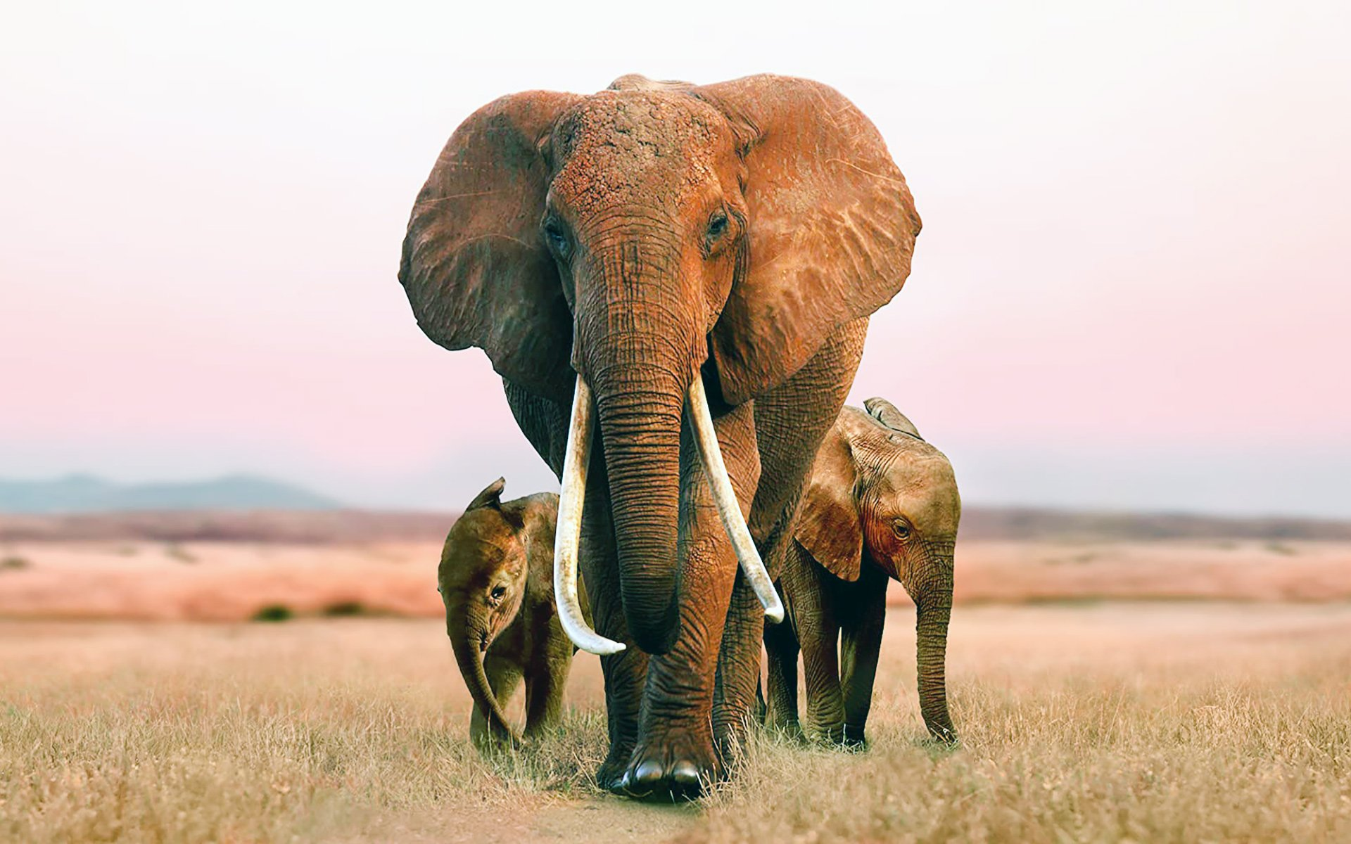 Elephant Queen shies away from a few dark realities facing the African elephant such as poaching but is it also wise to look on the bright side sometimes.
