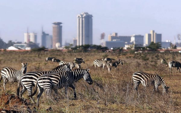 Nairobi National Park might be the smallest in Africa yet it is packed with exciting things to do. Here are five that you should not miss to do.