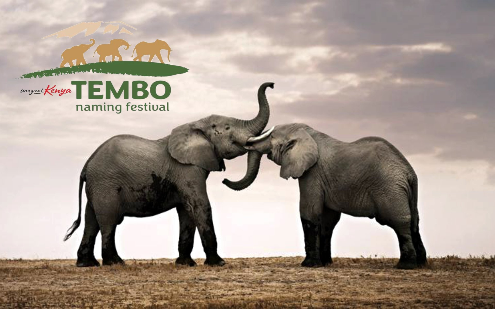 Feel like giving a Tembo your name? You have three categories from which to choose an elephant for the October 9 Naming Festival at Amboseli.